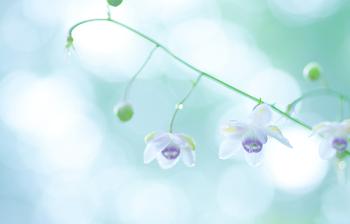 top_flower